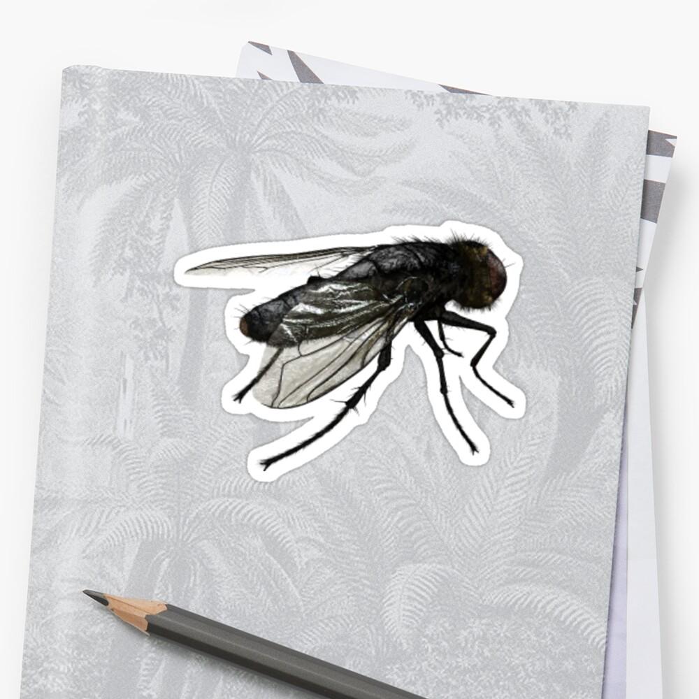 Real Fly by DenArtz