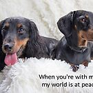 Puppy love 6 by Sarah Guiton