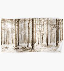 Sunlit Hazy Trees in Neutral Colors Poster