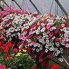 Flowers In A Nursery by WildestArt