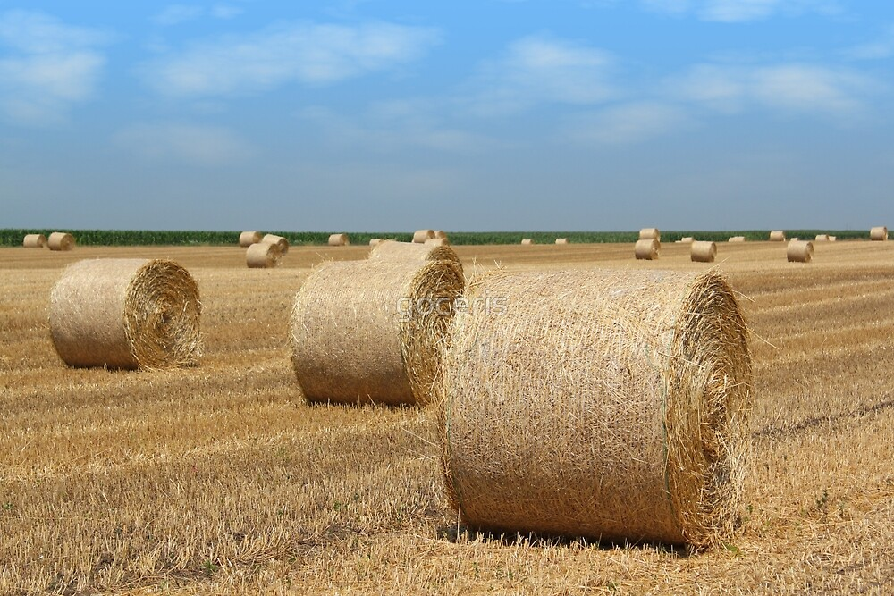 straw bales agriculture industry by goceris