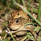 """""""Froggie Went a Courtin"""" by BlackDove1128"""
