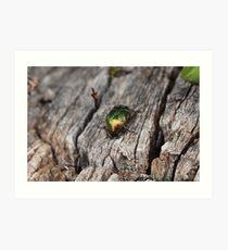 Escarabajo dorado Art Print