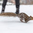 Central Park Squirel by Nick Jermy