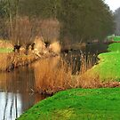 Green meadows and brown reeds by jchanders
