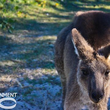 Kangaroo by EonEnt
