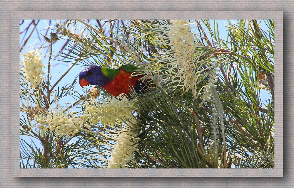 A bird in the Bush by john NORRIS