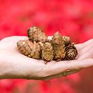 A handful of autumn by Zoe Power