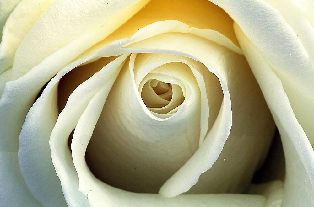 White Flower by ttrendell77