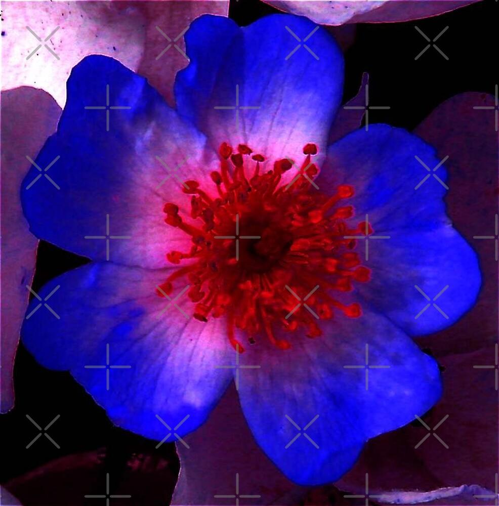 Blue Rose by Artisimo