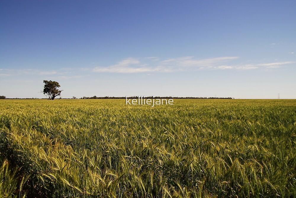 Field of Dreams by kelliejane