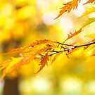 Autumn gold by Zoe Power