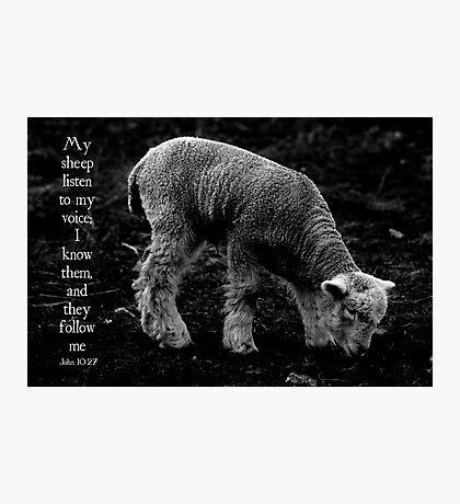 My Sheep Hear My Voice Photographic Print