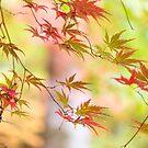 Dancing leaves by Zoe Power