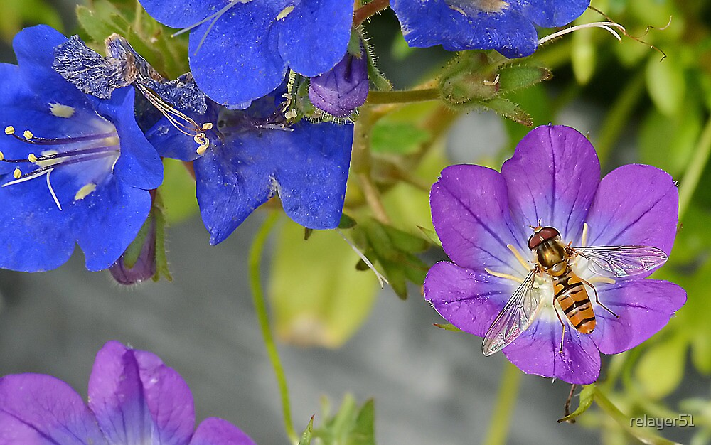 Hoverfly and Flowers by relayer51