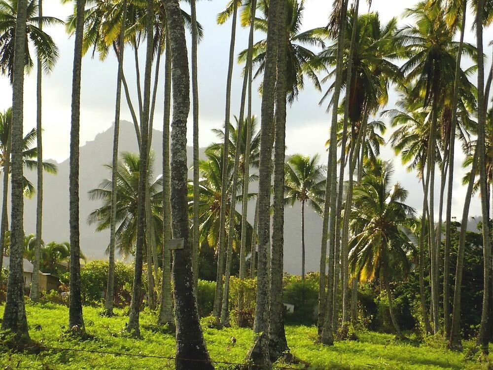 Coconut Grove by avalon1975