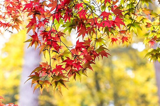 The prettiest autumn curtain by Zoe Power