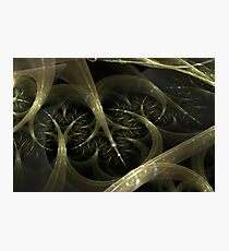 Root System Photographic Print