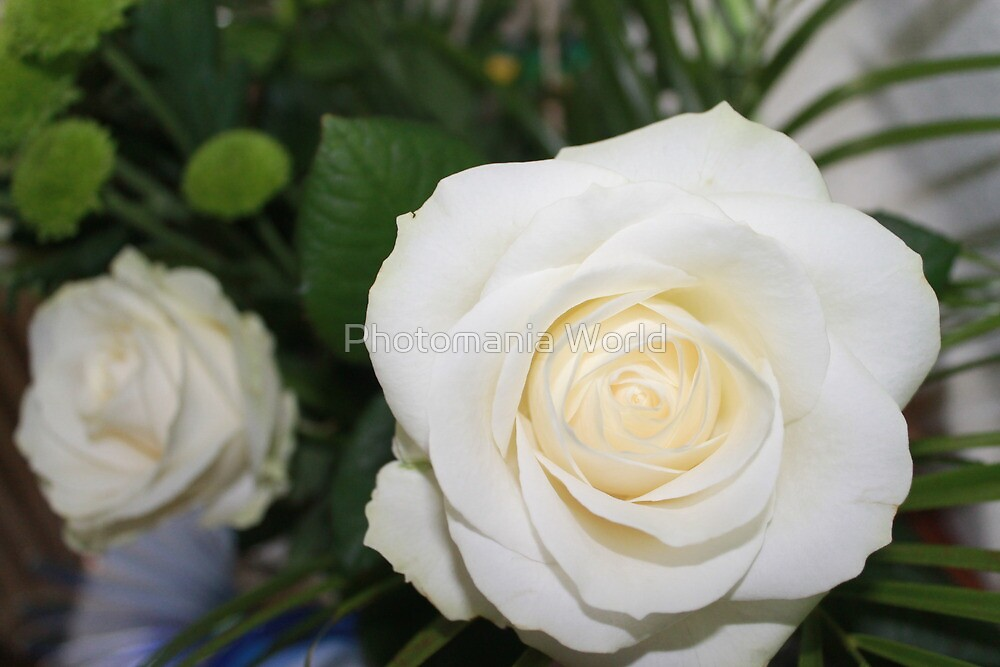 White Roses by Katherine Hartlef