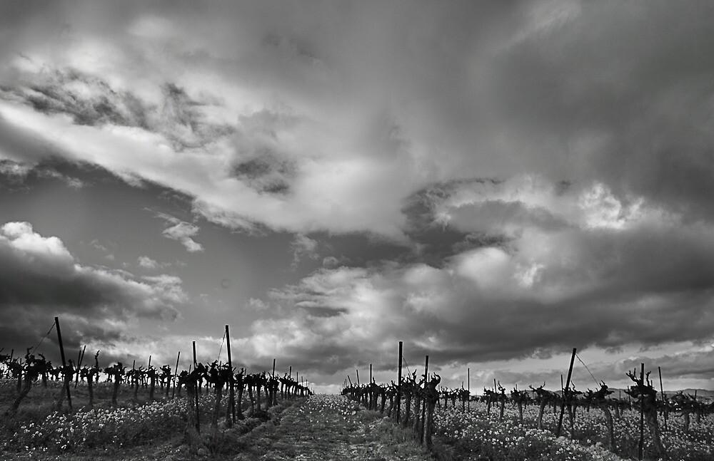 Winter vines by Paul Pasco
