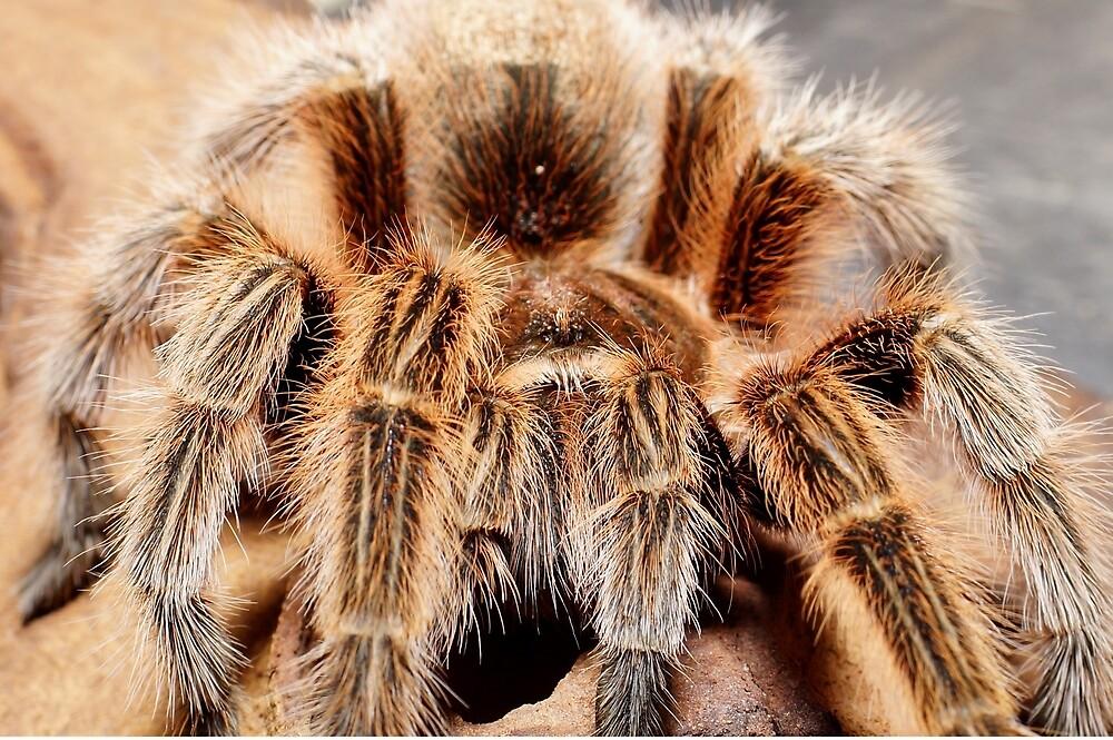 Tarantula by StuartSiviter