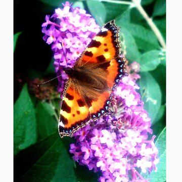 indie butterfly by bewareofaurora