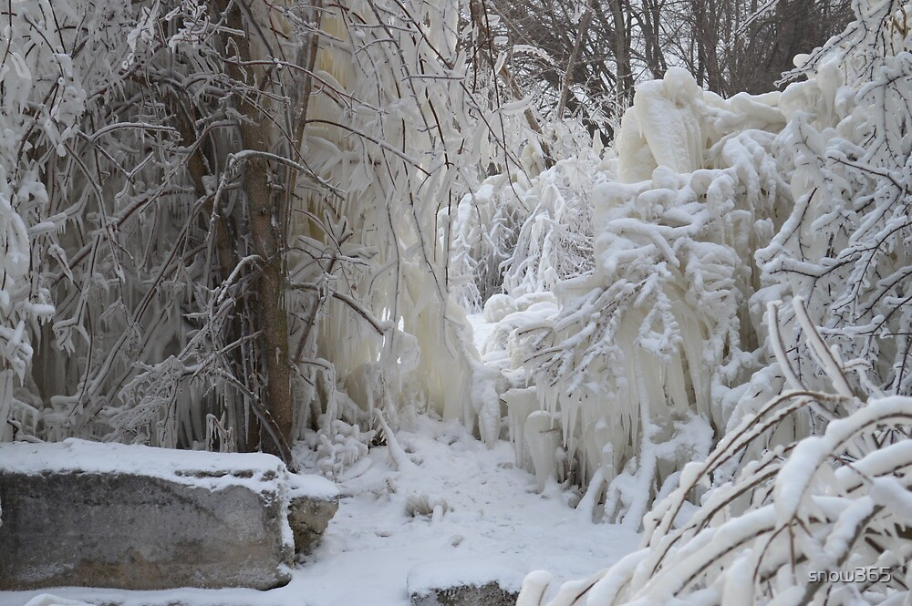 Trees covered in Ice by snow365