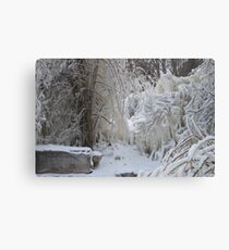 Trees covered in Ice Canvas Print