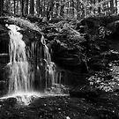 My Hidden Falls by Debra Fedchin