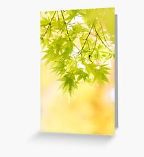 Dreamy Acers (portrait) Greeting Card