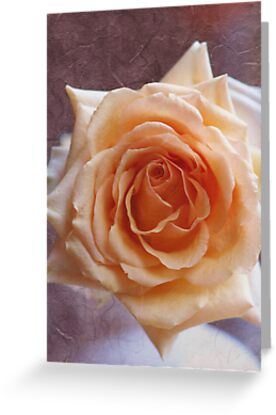 Romantic Rose in peach / orange. by walstraasart