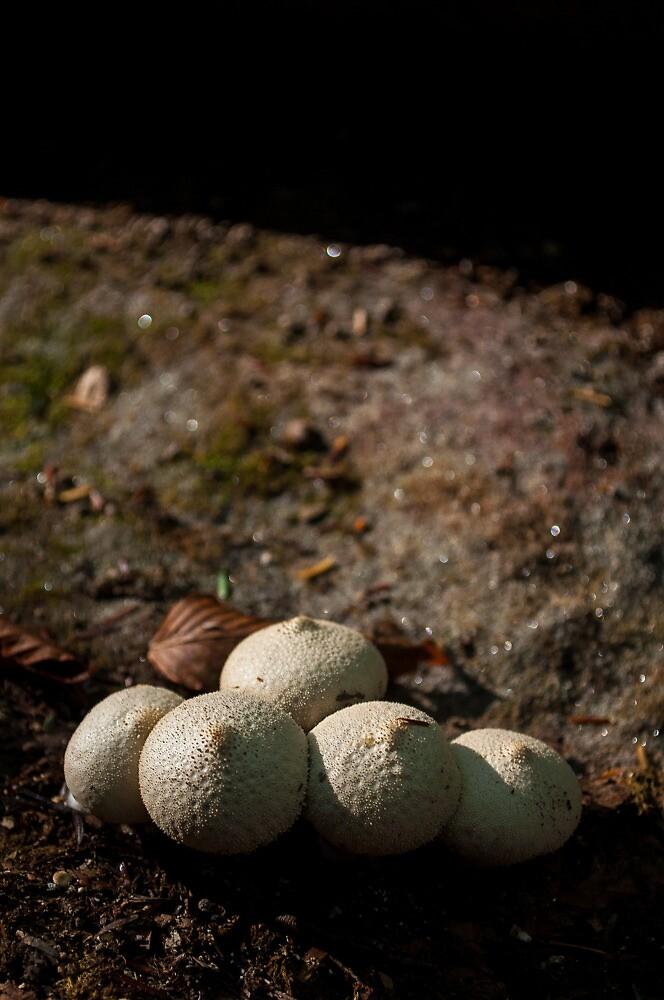 Fungi 1 by Brook Winegardner