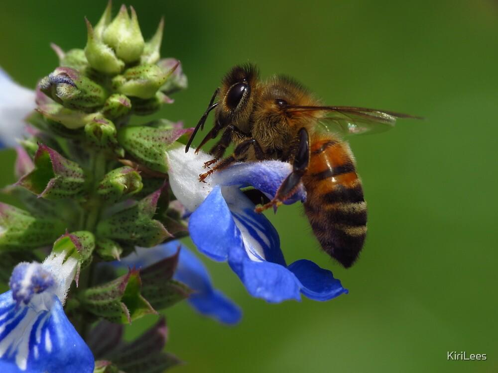 Honey Bee by KiriLees