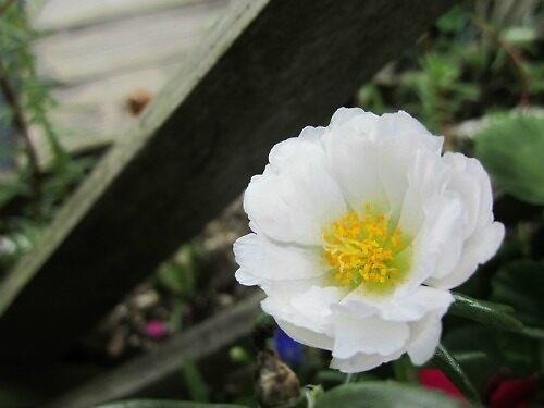 Garden Flower by Juliaaaroxxx
