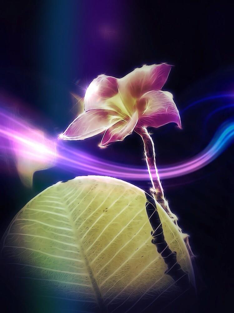 Fantastic frangipani by DerekEntwistle