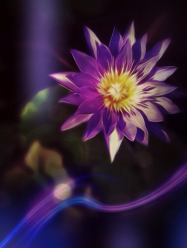 Lily with purple light by DerekEntwistle