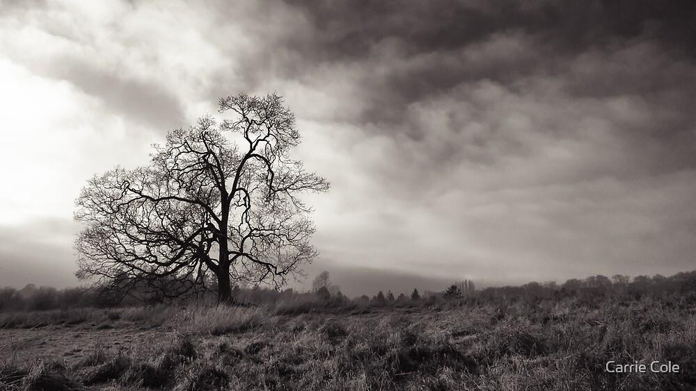 Swan Lake Oak by Carrie Cole