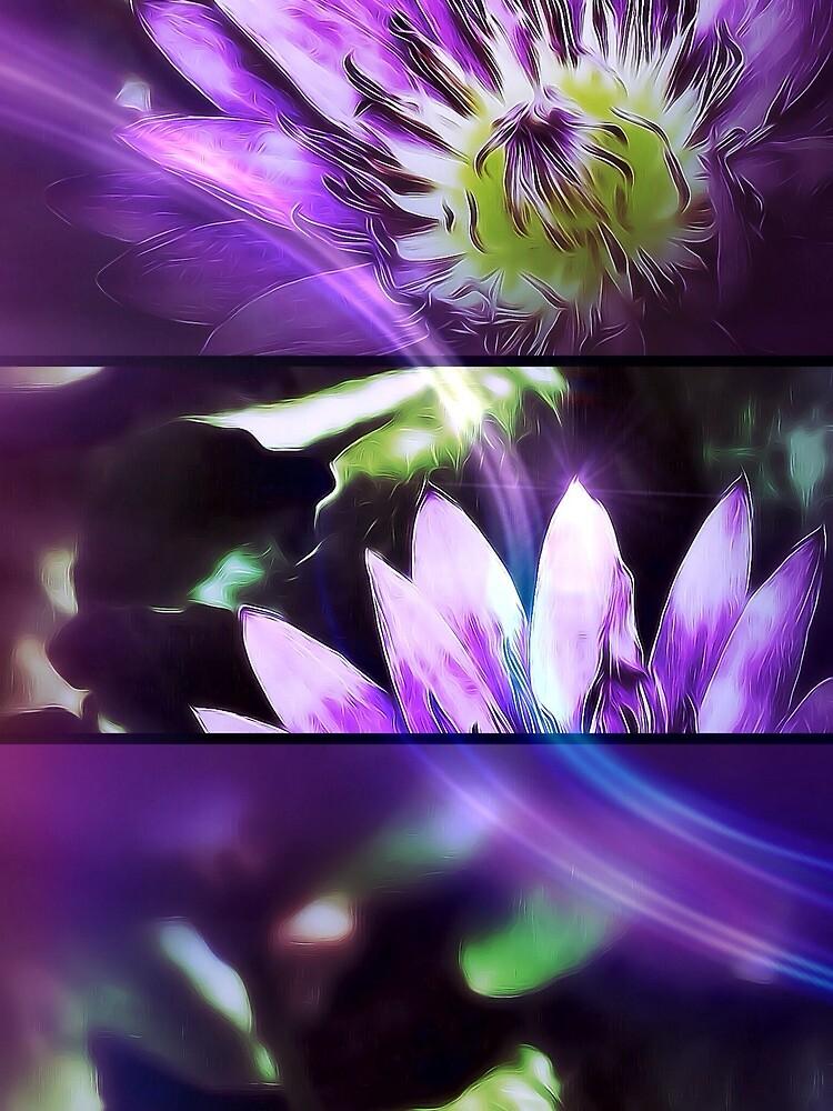 Trio in purple by DerekEntwistle