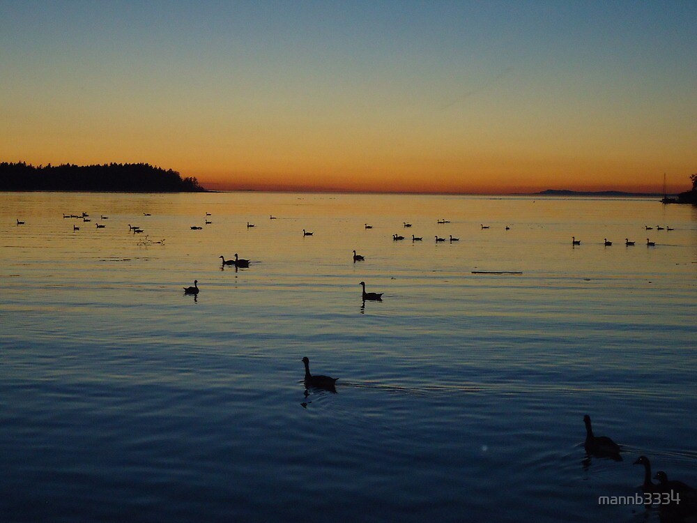 Canada Geese in the Sunset by mannb3334