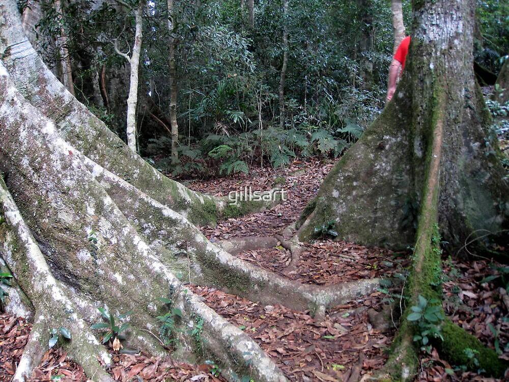 National Park Rain forest by gillsart