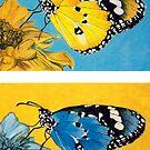 Pop Art Butterflies by Jennifer Gibson