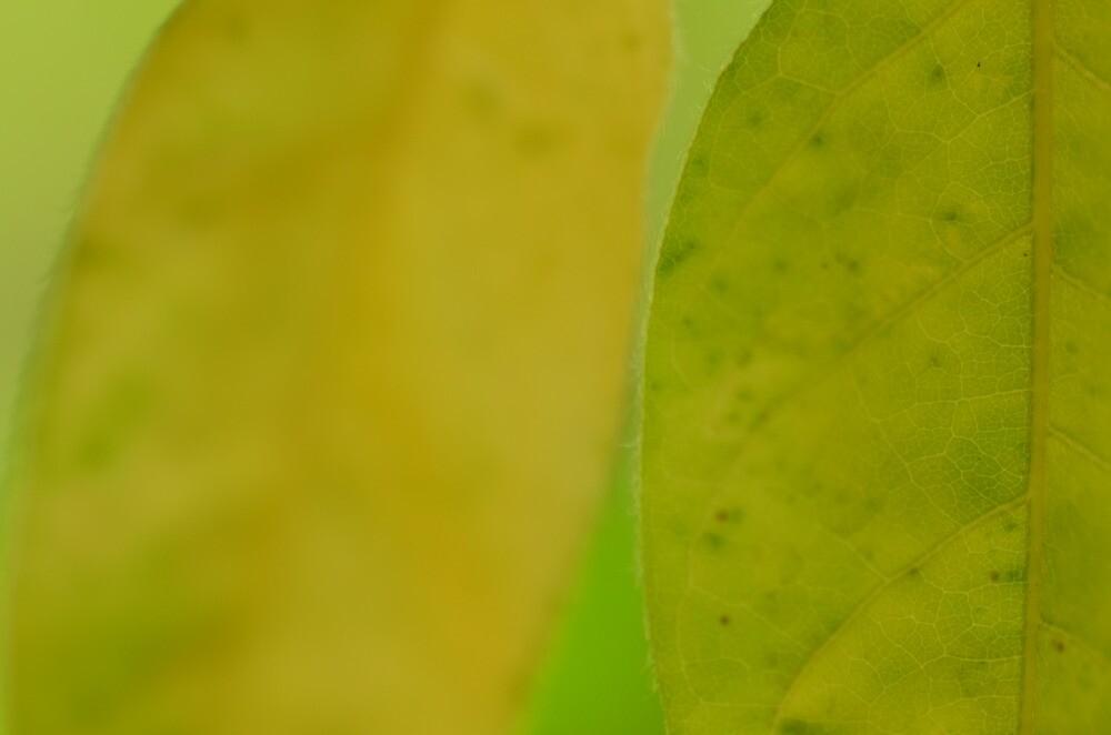 Macro Leaf by AliciaJayde