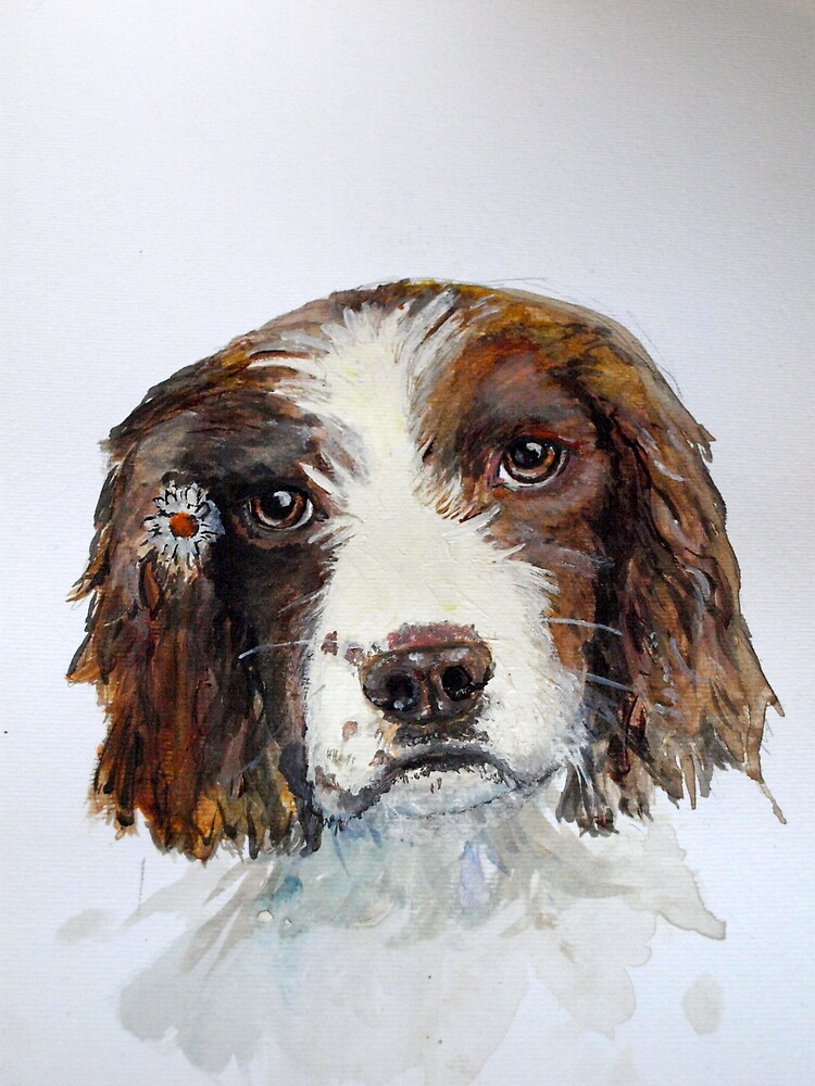 Springer Spaniel with daisy watercolour by oldmanrye