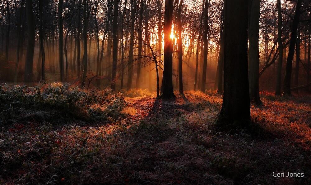 Winter Woodland Sunrise by Ceri Jones