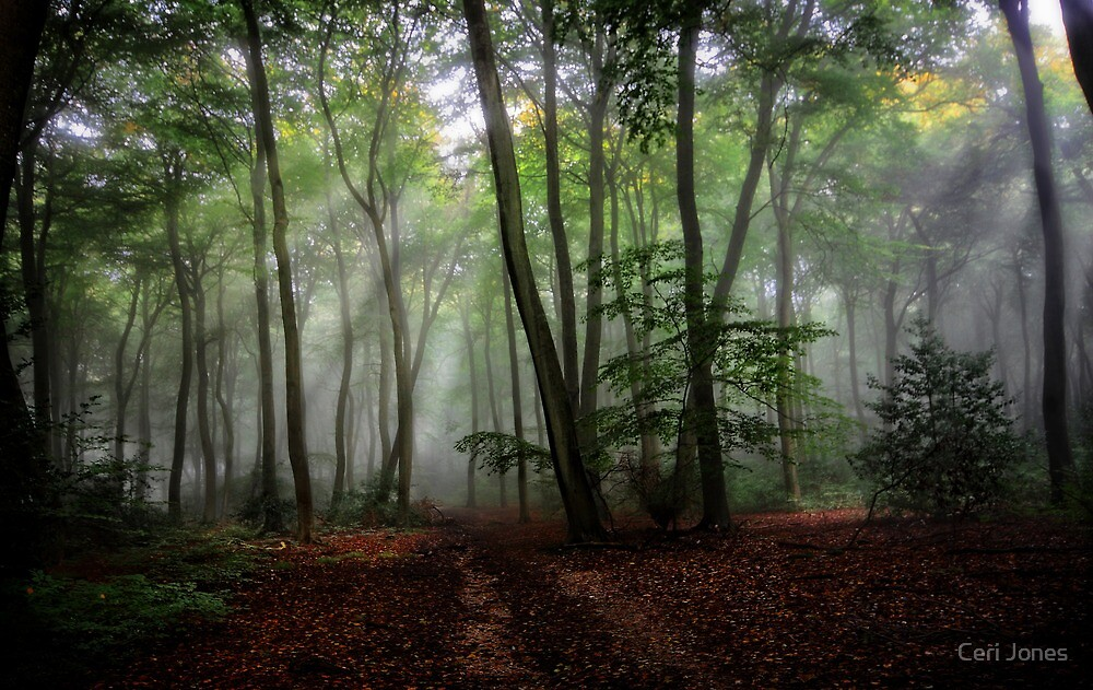 Misty Morning in the Woods by Photokes