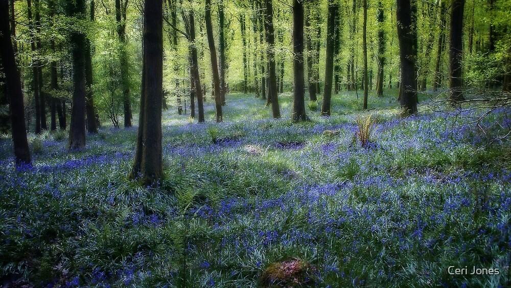 Spring Bluebell Woods by Ceri Jones