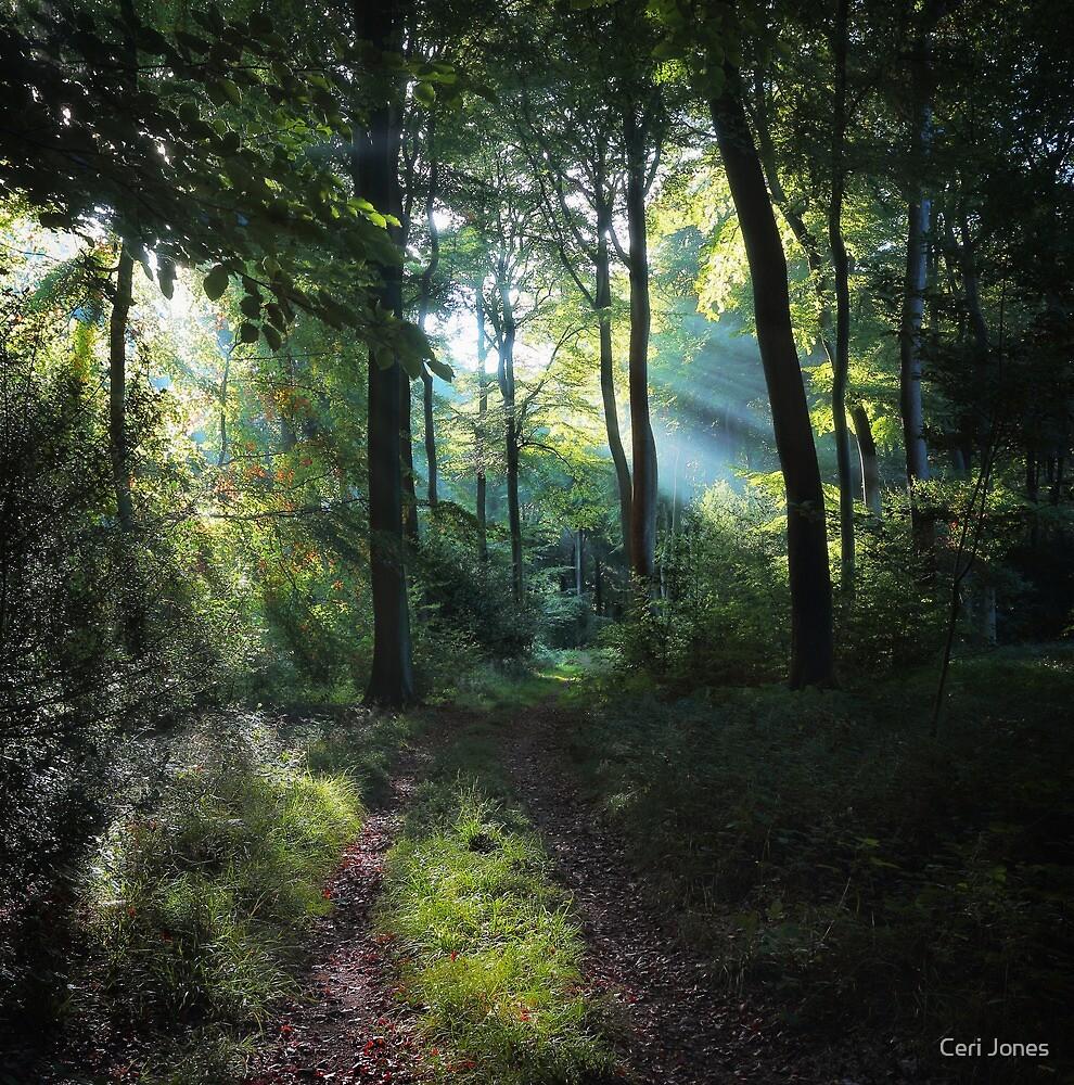 Woodland Light by Ceri Jones