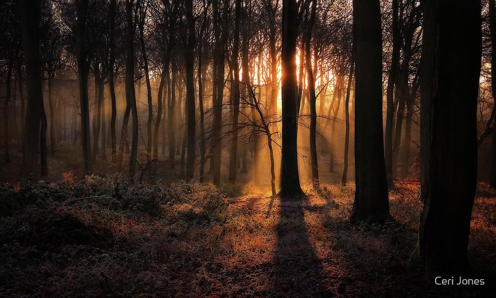 Winter Woodland Dawn by Ceri Jones