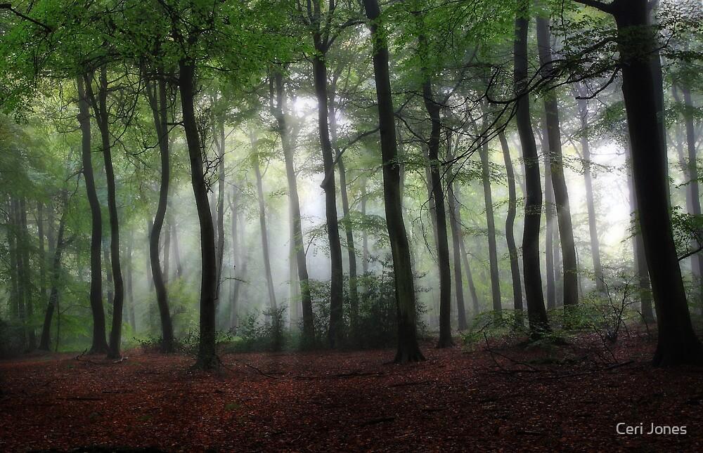 Summer morning Woods by Ceri Jones