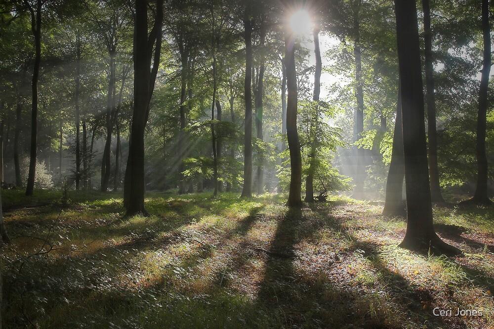 Sunlight in Summer Woods by Ceri Jones